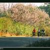 Du lịch Nha Trang mùa hoa đỗ mai nở