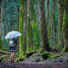 Khám phá 13 điều rùng rợn về khu rừng tự sát tại Nhật Bản