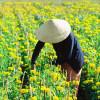 Du lịch đến chốn yên bình ở vùng ngoại ô Nha Trang