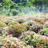 Kon Tum thời khắc giao mùa đẹp ngây ngất lòng người