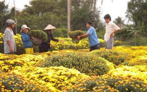 Độc đáo chợ hoa vạn thọ Võ Cảnh Nha Trang