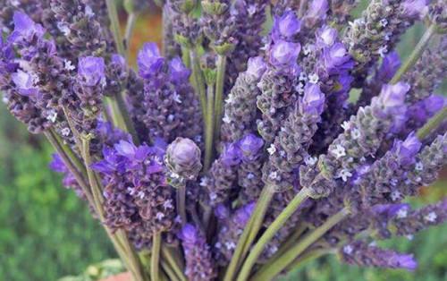 Say đắm với hương sắc của các loài hoa ở Đà Lạt