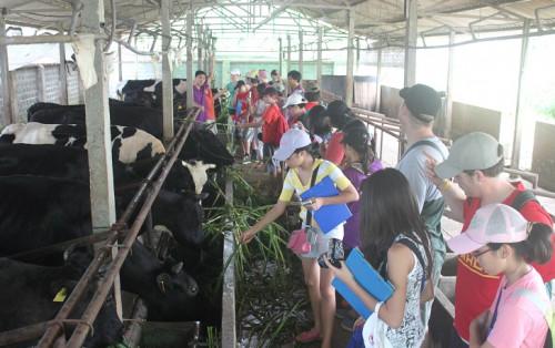 Thử tài làm nông dân ngay hè này với trại bò giống Ba Vì!