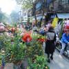 Dạo quanh ngắm 4 chợ hoa Tết Hà Nội độc đáo và nổi tiếng nhất