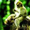 """Du lịch Hồ Chí Minh: Đến đảo khỉ Cần Giờ cẩn thận bị """"CƯỚP"""""""