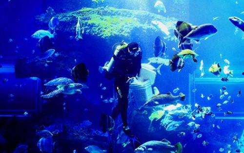 Viện Hải Dương Học Nha Trang nơi lưu giữ hàng nghìn sinh vật biển