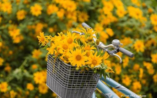 Đà Lạt – Nàng tiên thay áo mới theo những mùa hoa