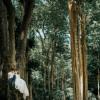 Đẹp ngây ngất với rừng săng lẻ ở Nghệ An