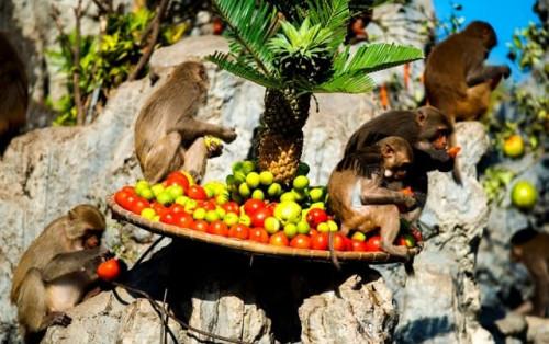Đảo Khỉ Nha Trang – tận hưởng niềm vui mới lạ và hấp dẫn