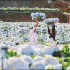 Mách bạn những địa điểm chụp ảnh cưới siêu lãng mạn tại Đà Lạt