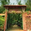 Làng tre Phú An – Điểm đến thân quen của những người yêu thiên nhiên