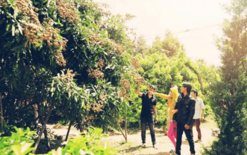 """Vườn trái cây Lái Thiêu Bình Dương – """"Thánh địa"""" của các loại cây trái"""