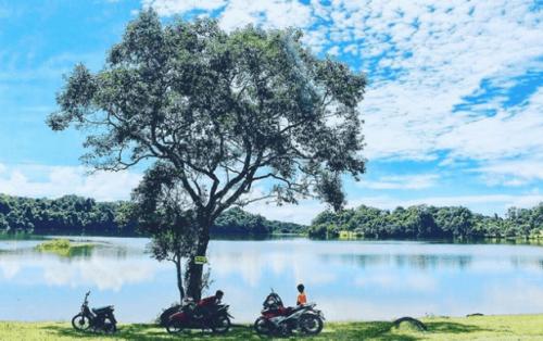 """Trảng cỏ Bù Lạch – Thảo nguyên """"hoa vàng cỏ xanh"""" ngoài đời thực"""