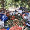 """Vườn trái cây Cái Mơn Bến Tre – Xứ sở của """"cây lành trái ngọt"""""""