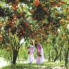 """Thưởng thức trái cây """"mệt nghỉ"""" tại vườn trái cây Út Tiêu Long Khánh"""