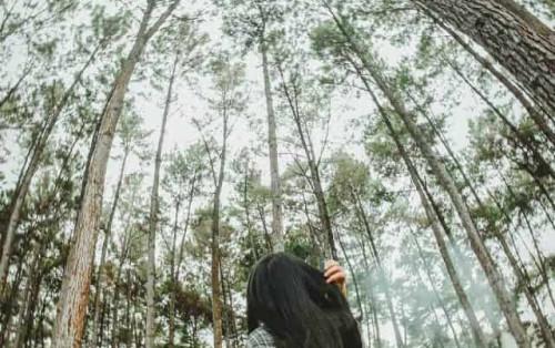 """Phượt rừng thông Yên Minh – Khám phá """"Đà Lạt của Hà Giang"""""""