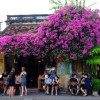 Hội An ngập tràn muôn sắc hoa nở rộ khi vào mùa hè