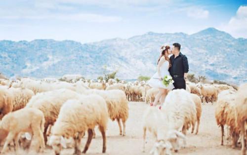Mê mẩn Đồng cừu An Hòa – Điểm checkin gây sốt giới trẻ