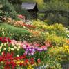 Chiêm ngưỡng trăm hoa đua sắc ở vườn hoa Minh Tâm Đà Lạt