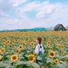 """""""Rụng tim"""" với phim trường Rose Garden đẹp ngây ngất ở Bắc Giang"""