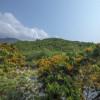 """""""Choáng ngợp"""" sắc hoa rực rỡ trên cung đường lên núi Thần Tài"""
