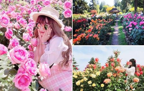 2/9 đi đâu ở Hà Nội? Công viên hoa hồng lớn nhất Việt Nam mở cửa 2/9
