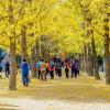 Kinh nghiệm đi du lịch Hàn Quốc mùa nào đẹp nhất