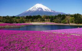 Tất cả kinh nghiệm du lịch núi Phú Sĩ Nhật Bản bạn nên cần biết