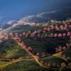 Đường tới đồi chè Ô Long đẹp mê mẩn đón xuân sớm ở Sa Pa