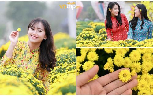 """Phát hiện cánh đồng cúc mâm xôi đầu tiên ở Hà Nội lên hình siêu cấp """"ảo"""" cho dịp tết Kỷ Hợi 2019."""
