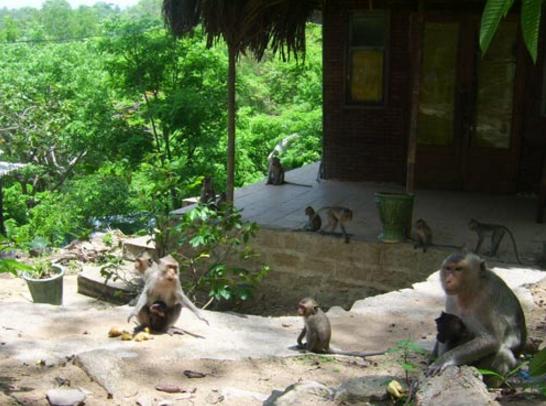 Chùa Khỉ - một tên gọi khách của Thiền viện Trúc Lâm Chân Nguyên