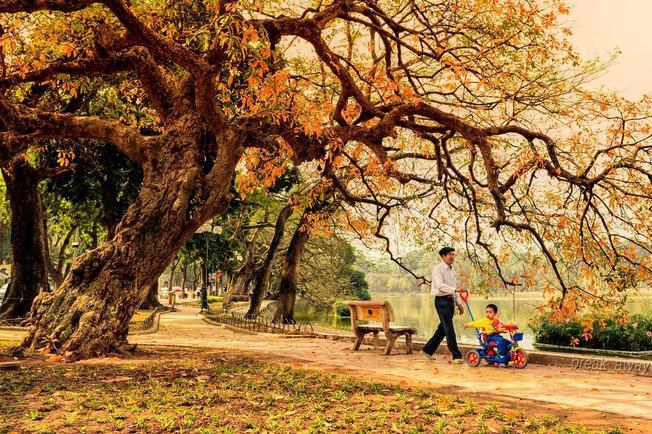 Bóng cây bên hồ Những thiên đường chụp ảnh mùa thu ở Hà Nội