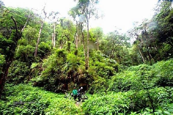 rừng Bằng Tạ