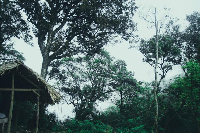 vườn quốc gia Tam Đảo - địa điểm chụp ảnh ở Tam Đảo