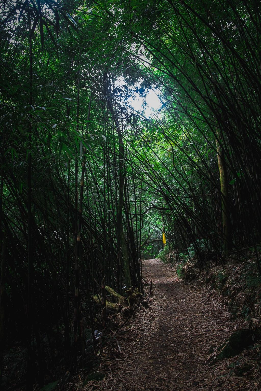 rừng quốc gia Tam Đảo - chụp ảnh ở Tam Đảo