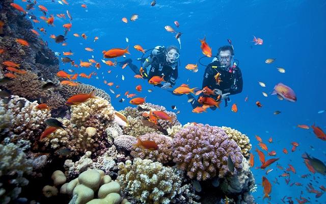 Chia sẻ tư vấn du lịch phú quốc với đảo san hô