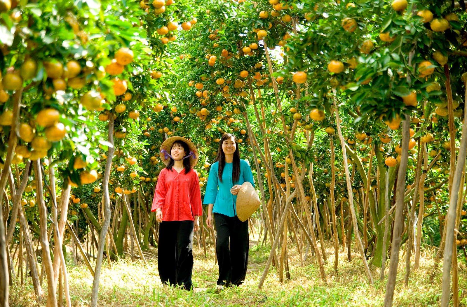 Khu vườn trái cây nổi tiếng ở Bến Tre (Ảnh: ST)