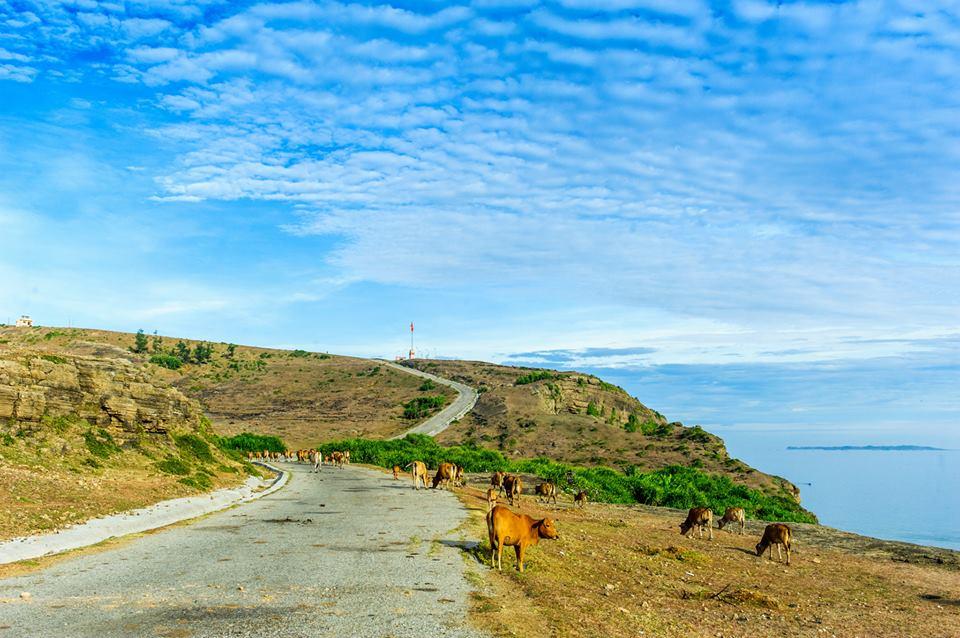 Kết quả hình ảnh cho cảnh quan hoang sơ Lý Sơn