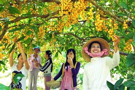 Khách tham quan vườn trái cây (nguồn sưu tầm)