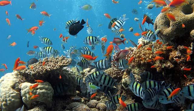 Lặn ngắm San hô: bán đảo Sơn Trà