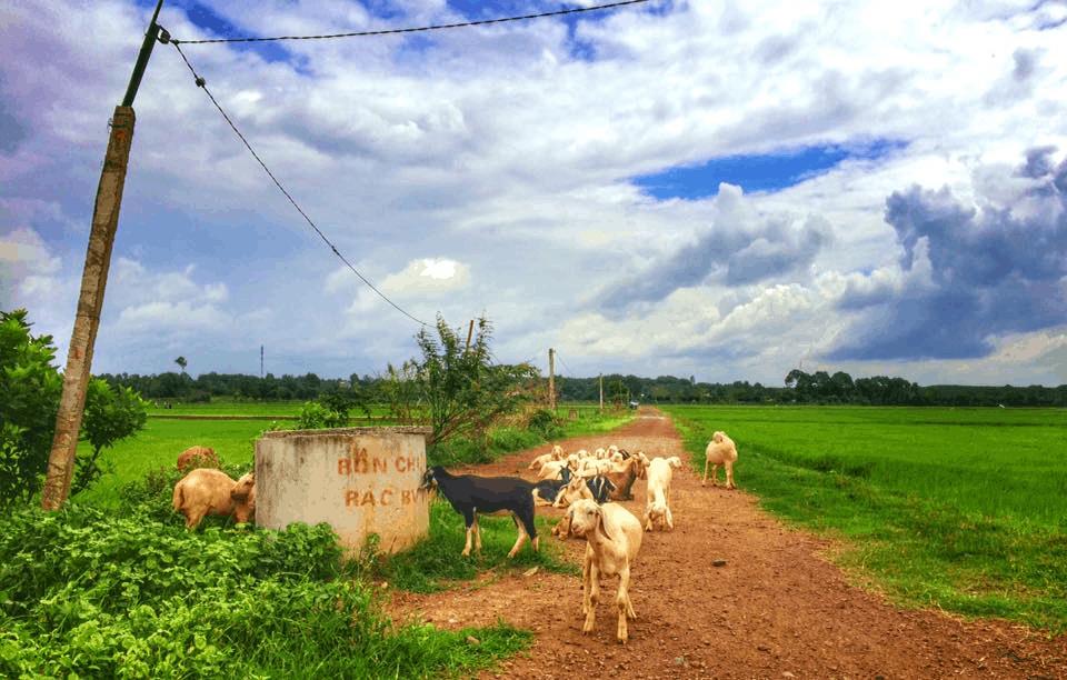 Trải nghiệm cuộc sống miền quê tại đây (Ảnh: Sưu tầm)