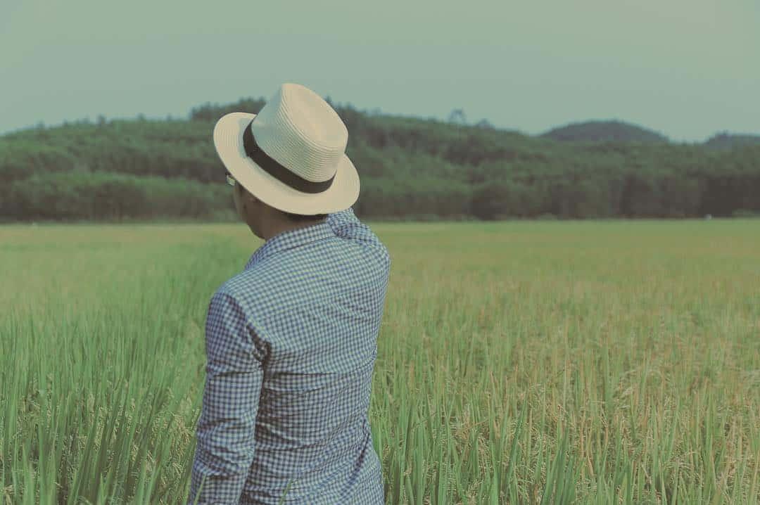 Đường lên đồi chè còn có những cánh đồng lúa mênh mông (Ảnh: ST)