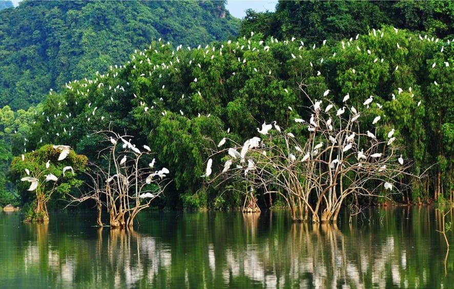 Khu vườn chim với số lượng chim lớn vô cùng (Ảnh: ST)