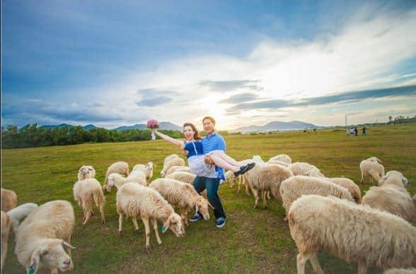 Các bức ảnh chụp trang trại cừu Vũng Tàu
