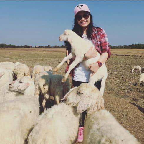 Vui chơi tại cánh đồng cừu Suối Nghệ