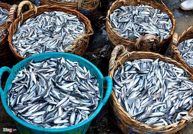 Cá cơm đặc sản quảng ngãi