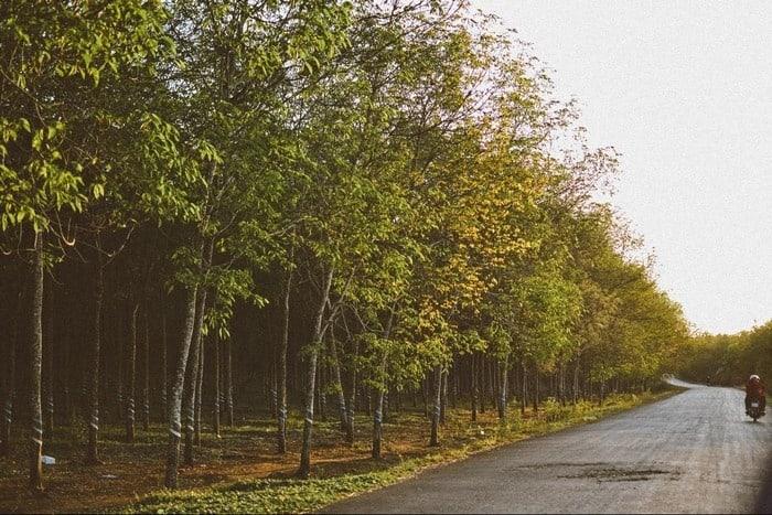 Đường vào khu du lịch Hồ Cốc vũng tàu rợp bóng cây xanh (Ảnh sưu tầm)