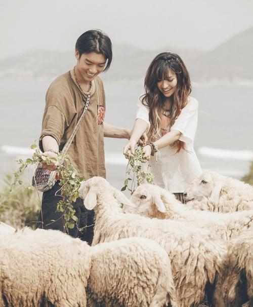 Cho cừu ăn tại đồi (Ảnh: ST)