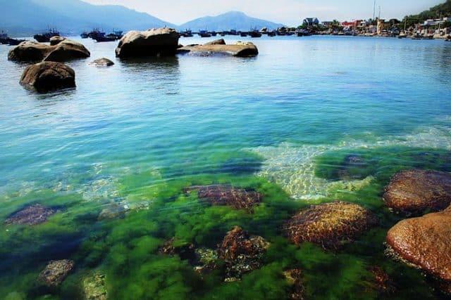 du lịch bãi rêu đảo bình hưng nha trang