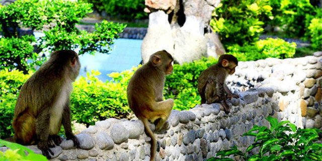 du lịch đảo khỉ nha trang